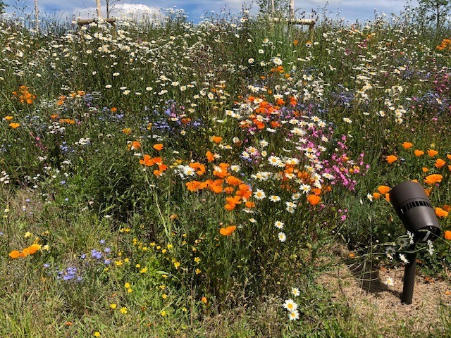 Blooming lovely! More flowers for our roadsides says Swindon council