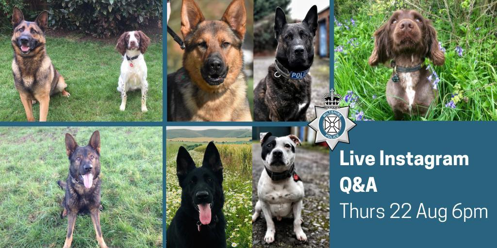 Wiltshire Police Dogs set for centre stage on Instagram livestream