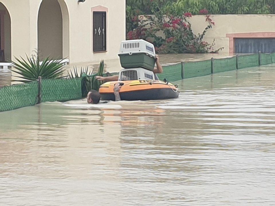 Swindon kitchen fitter saves 27 animals during devastating floods in Alicante