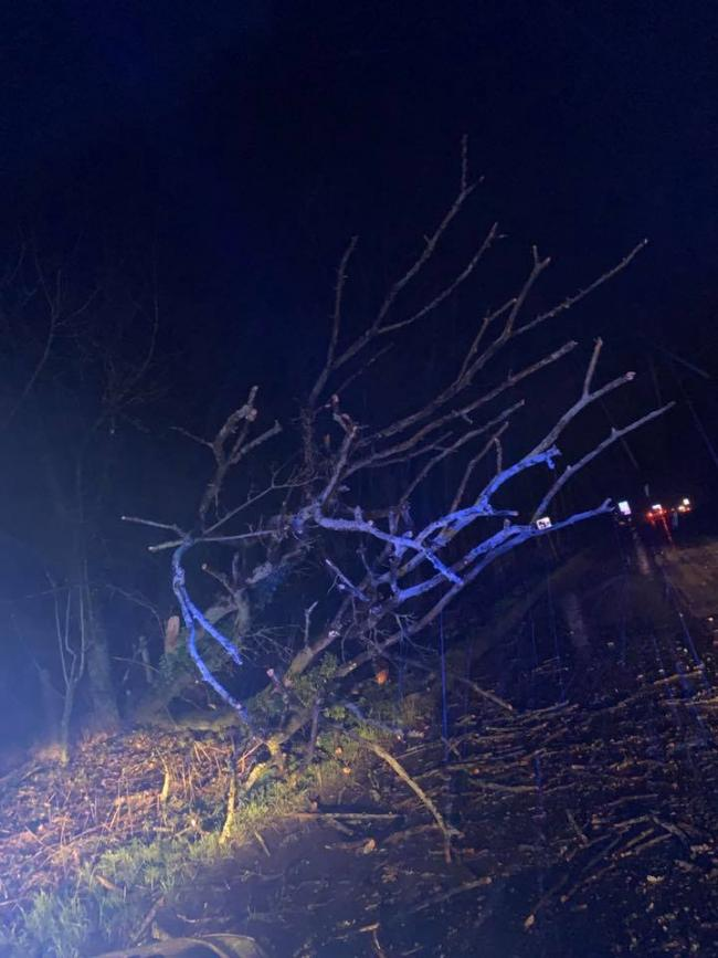 The fallen tree dealt with by Royal Wootton Bassett Police Picture: RWB POLICE/FACEBOOK