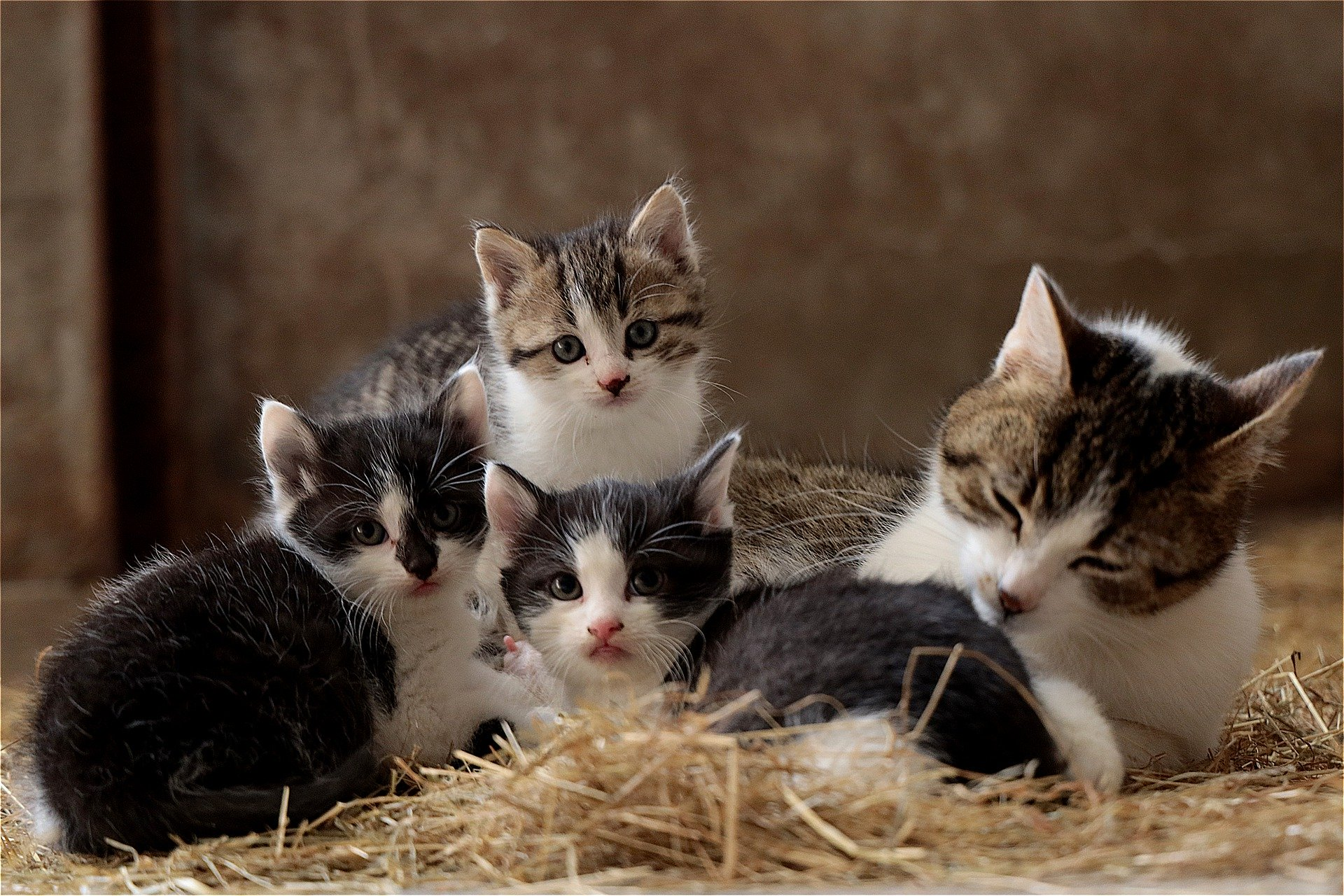 These Are The 22 Most Expensive Kittens To Buy In The Uk Swindon Advertiser