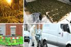 Pictures show cannabis at the property (WILTSHIRE POLICE) and forensics officers at the scene (DAVE COX)