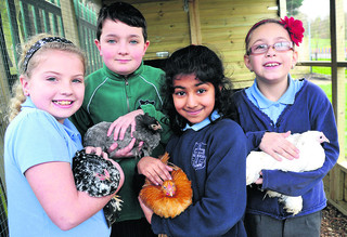 Pupils, from left, Gerogia Ouldridge, Ethan Scanlon, Ninoshka Fernandes and Shannon Ashforth with the chickens