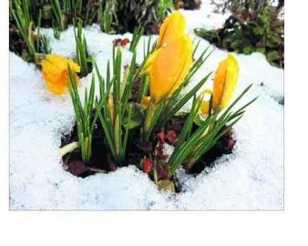 Pictures snapped by readers of the Swindon Advertiser.