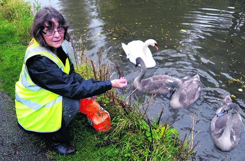 Sue Hulbert with the swans