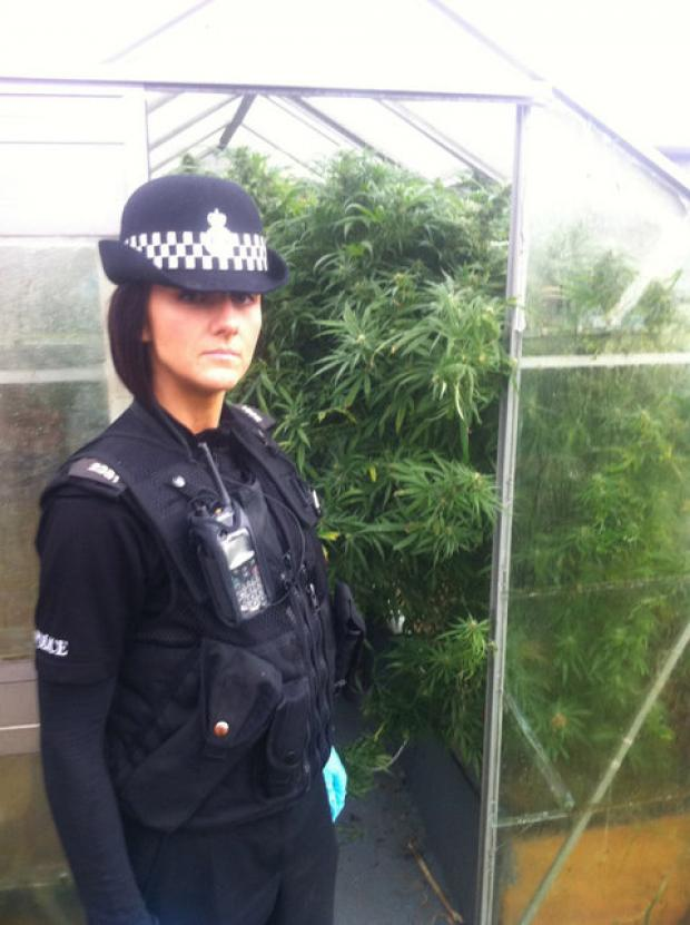 PC Stacey McGarry with a greenhouse full of cannabis found in Poplar Avenue