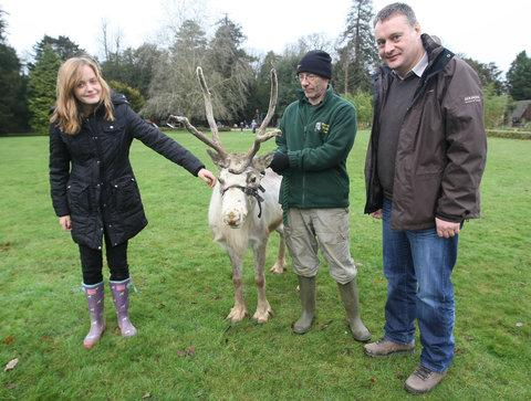Jess Robinson with her dad Dave, get up close to a reindeer with zoo keeper Colin Angus at