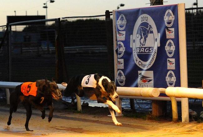 Blunsdon dog racing betting daskalos tip betting