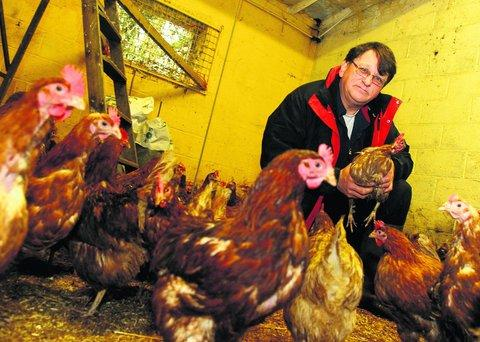 Swindon Advertiser: John Warwick with some of the hens that need rehoming