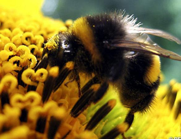 Swindon pupils to plant 'Bee friendly' gardens