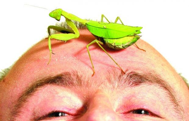 WHAT A HIDEOUS CREATURE And the praying mantis is no oil painting, either. Barrie Hudson gets up close and personal with Ventress
