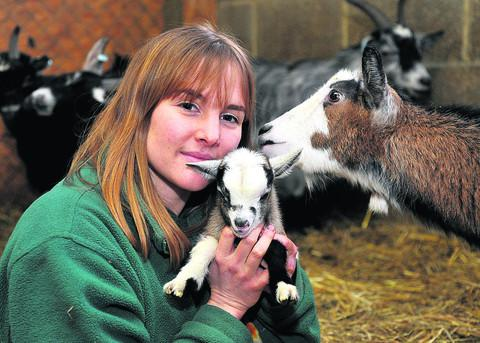Pippa Burr, pictured with pygmy goat kid Twiglet and mum Fern