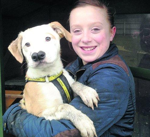 A DOG'S LIFE Sophie Uzzell, 11, with Billy a Staffie cross puppy at the Dogs Trust, who happily has found his new home and is heading off to pastures new.
