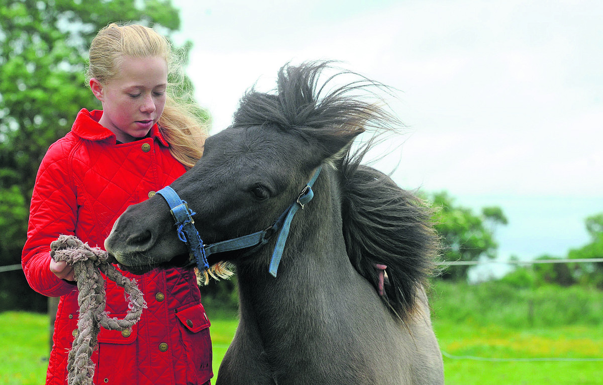 Witchcraft suspected in mysterious pony attack
