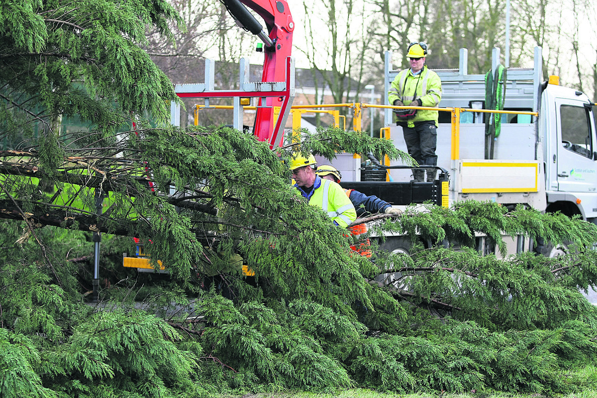 A large tree blocks the road in Edison Drive yesterday after damaging winds blew through Swindon