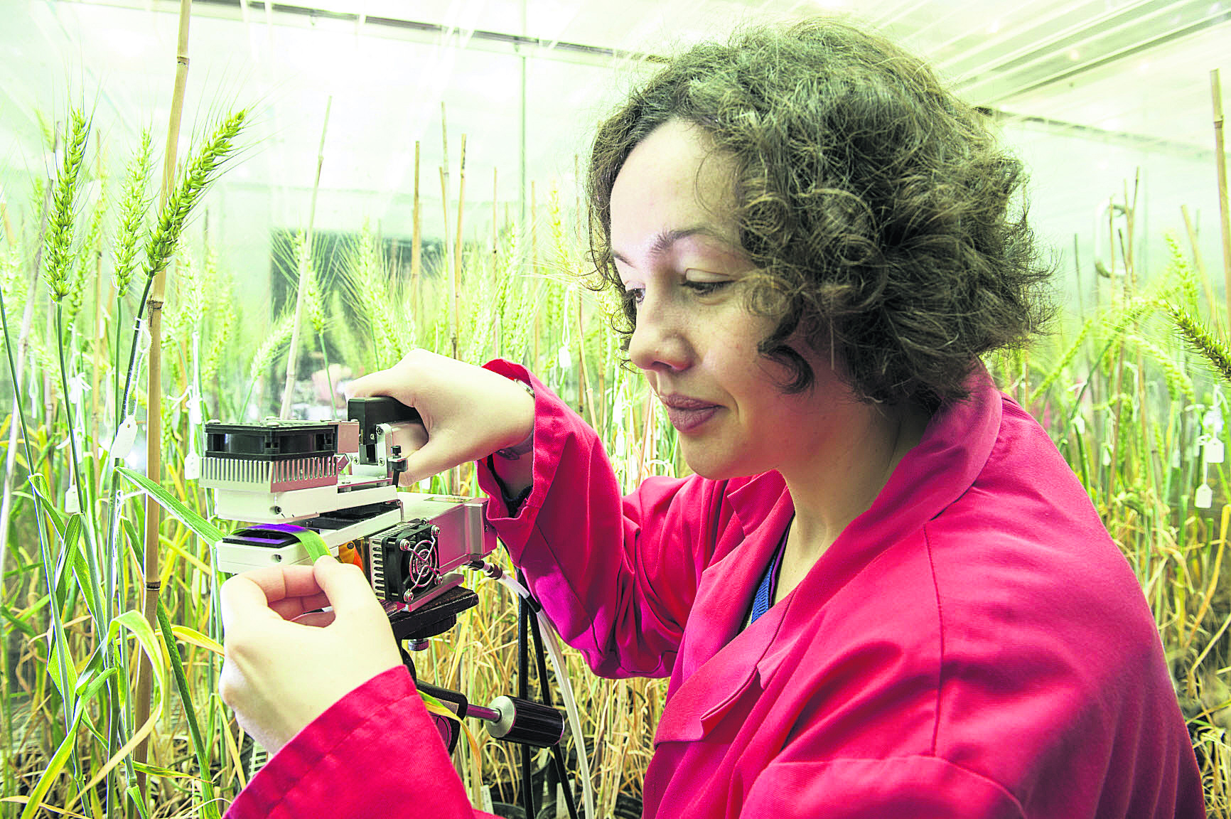 Swindon-born scientist Philippa Borrill, who is working on a project to improve the nutritional content of wheat