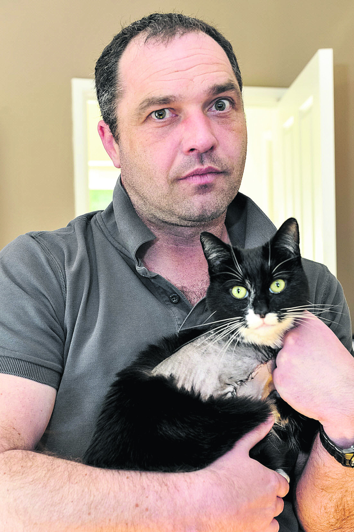Cat loses leg after air rifle shooting