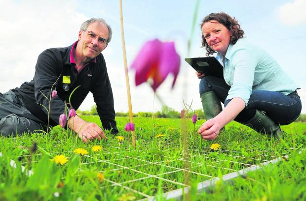 Emma Rothero, a floodplain meadows partnership outreach co-ordinator at North Meadow National Nature Reserve Cricklade, with John Barratt, counting the numbers of the rare snakeshead fritillary