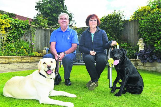 Alan Fletcher has raised £30,000 in his Joy appeal in memory of his guide dog. He is pictured with dogs Nutmeg, Joy's new namesake and puppy walker Barbara Paul