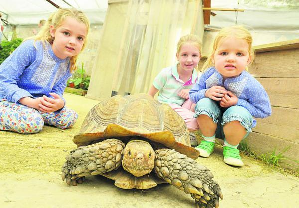 Taking it nice and slow at Studley Grange as children get to meet and feed the animals. Pictured are Holly, Ella and Isabelle with George the Sulcata Tortoise