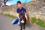 Luke Bartley, 19, saved Staffordshire bull terrier Penfold from dog death row - now the pooch needs a loving home