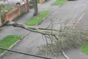 High winds bring down large tree branch on residential street
