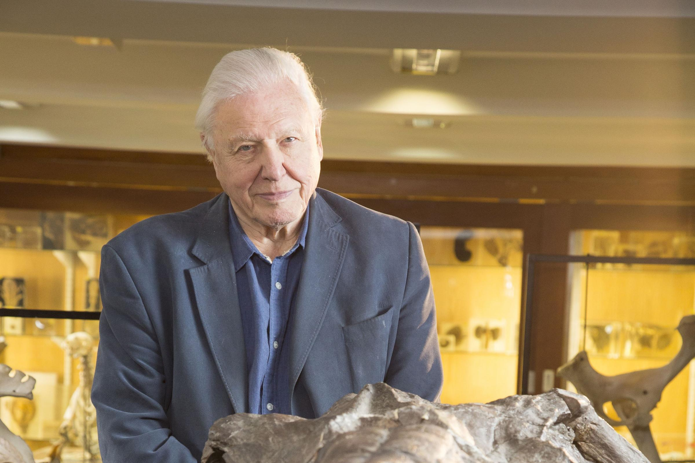Sir David Attenborough on retirement: I dread not working (BBC/Robin Cox)
