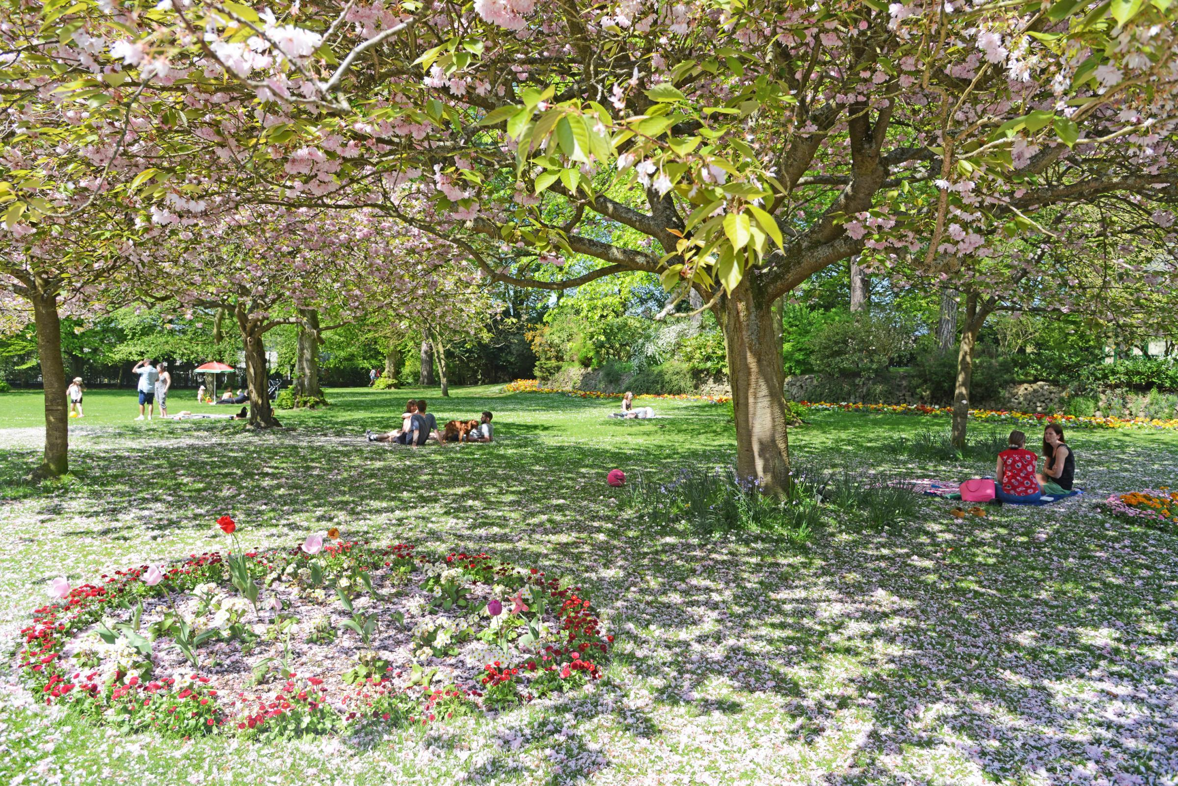 Town Gardens in bloom. Picture: THOMAS KELSEY