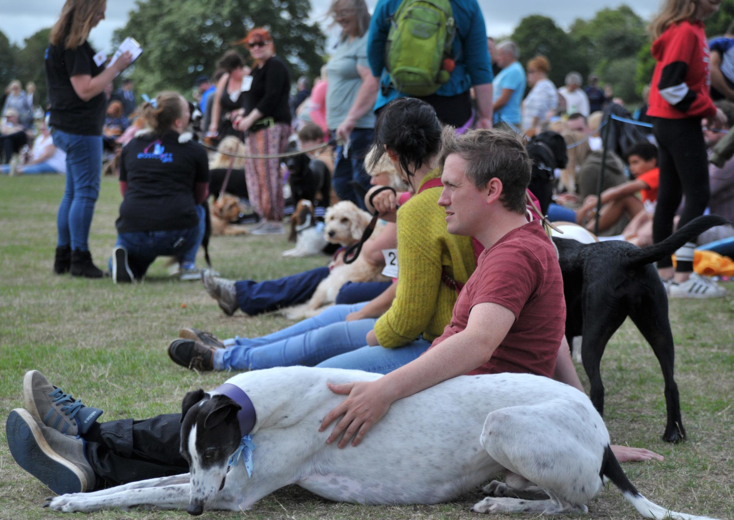 Lydiard Bark Dog Show Organised by Eastcott Vets. 10 classes, plus dog training, stalls, etc at Lydiard Park. Pic - gv Date 19/8/18 Pic by Dave Cox