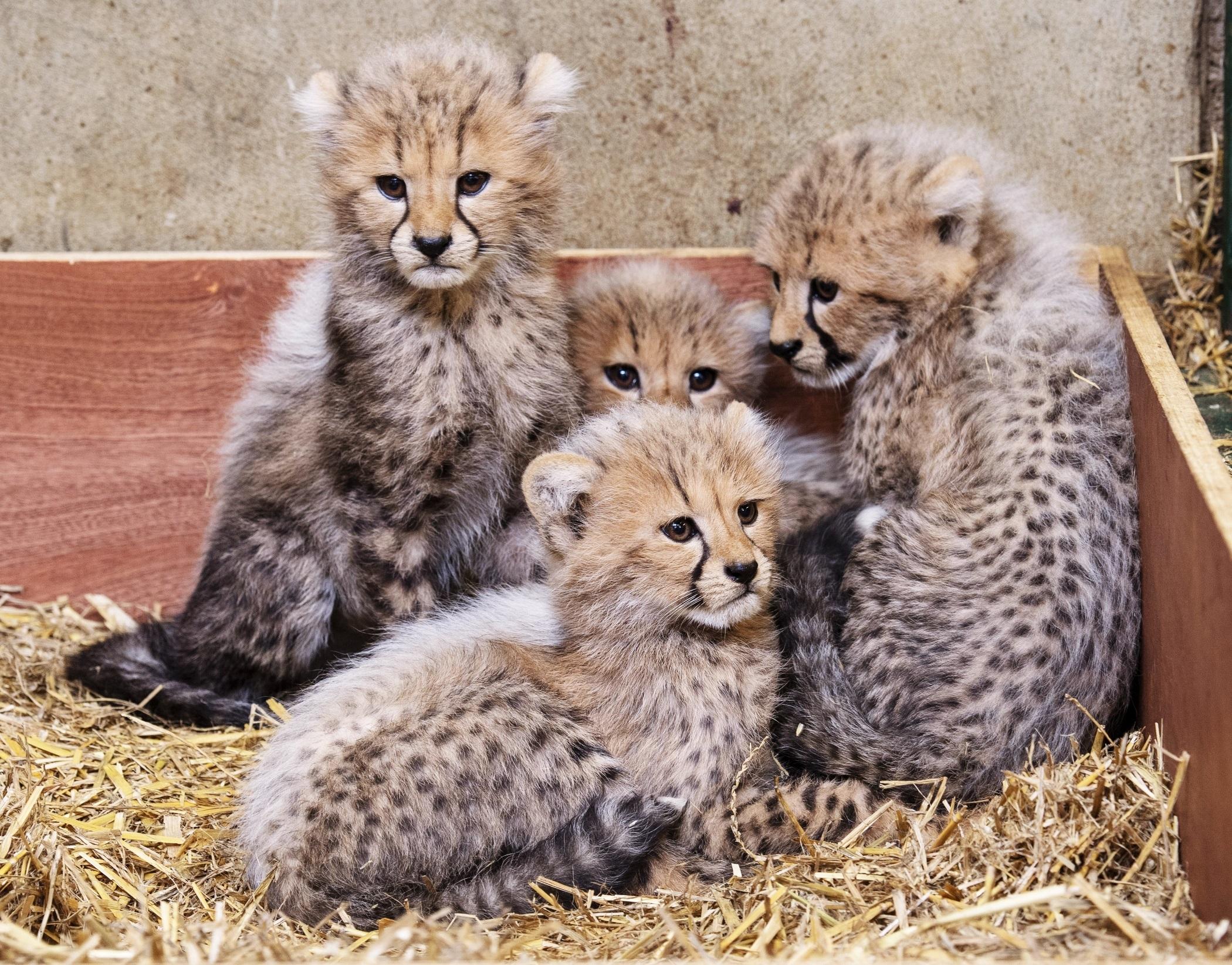 Dating websites uk 2019 cubs
