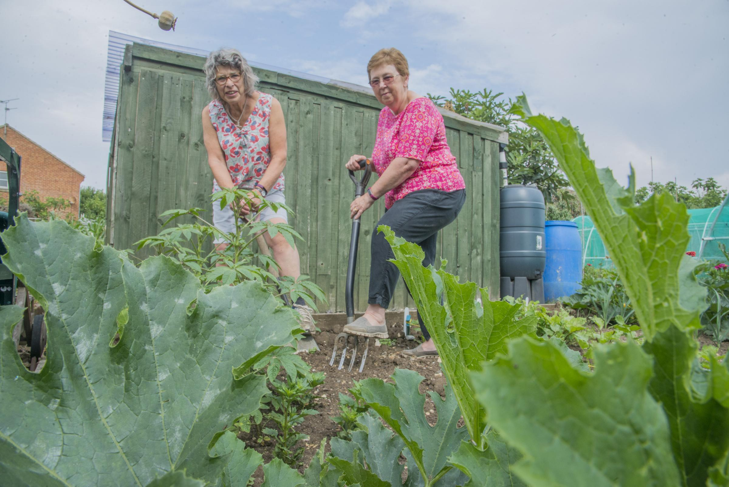 Allotment holders Linda Kasmaty and Barbara Crook pictured earlier this summer. Picture: Thomas Kelsey