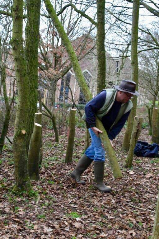 Volunteers were out coppicing ash trees (and they say it'll help oaks and bluebells)