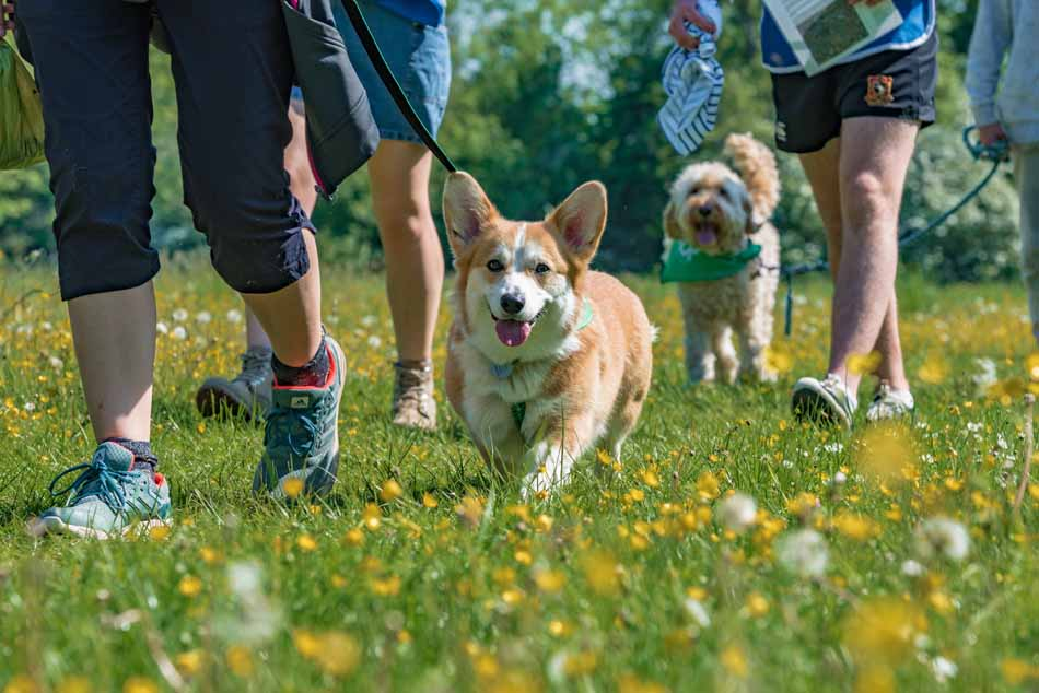 Bath Cats and Dogs Home Wag Walk