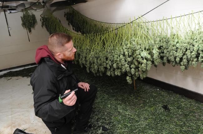 Police in the cannabis factory found in nuclear bunker at Chilmark in 2017 								                Picture: TOM GREGORY