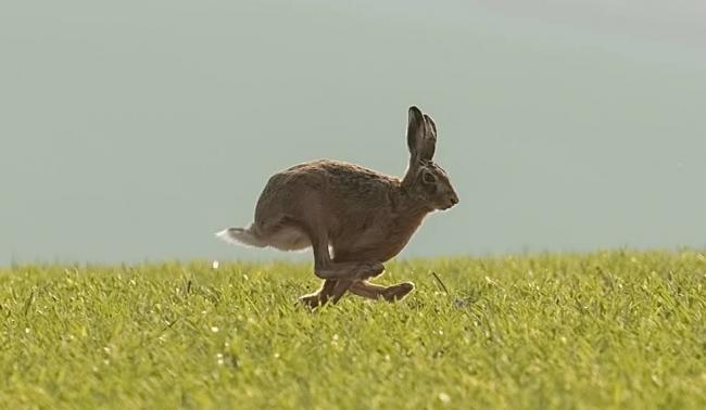 David Dunn saw this hare hopping across the countryside